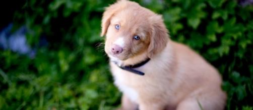 Deadly Bacterial Disease Kills Multiple Dogs in northern New Jersey ... - invisiverse.com