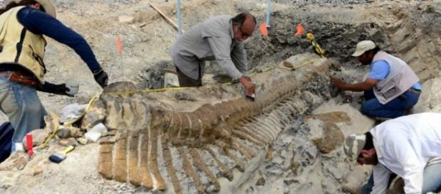 Dinosaur Tail In Mexico Desert Is A Staggering 16-Feet In Length ... - isciencetimes.com