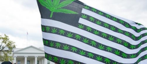 Cannabis Industry Fetes Successes, Mulls Trump Win - MG Retailer - mgretailer.com