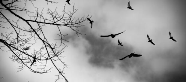 Alçar vôos para caminhos que nos fazem o melhor que podemos ser