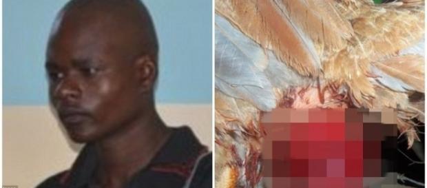Homem é condenado por violentar uma galinha