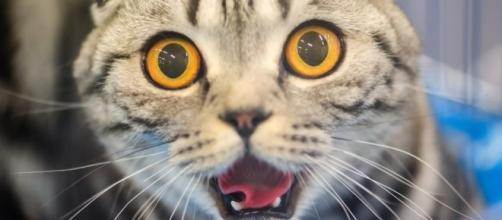 You're Not Crazy. Your Cat IS Talking To You. - thedodo.com