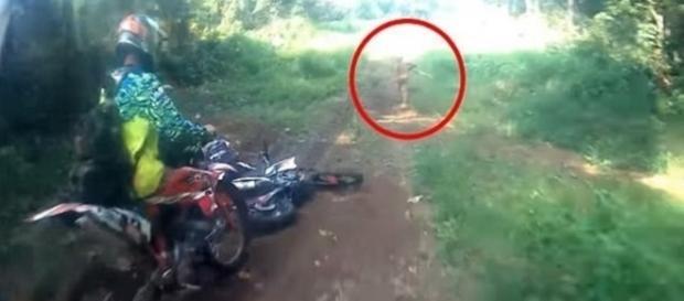 Homens flagraram criatura estranha correndo na floresta na Indonésia.