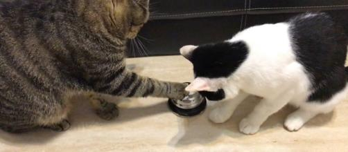 Cats Ring Bell for Food - Watch or Download   downvids.net - downvids.net