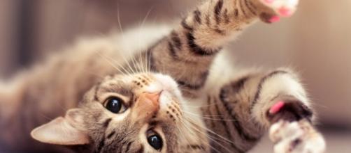 Los beneficios de tener un gato como mascota | Astrolabio - com.mx