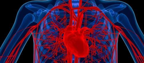 New method for regrowing blood vessels developed - newatlas.com