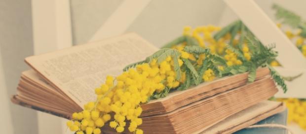 Libri festa della donna 2017 - blog.scritto.io
