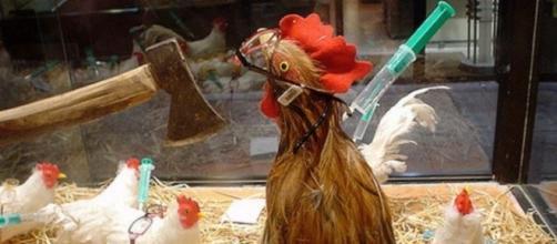 Bird flu (avian influenza) via Flickr, Charles Hutchins (CC BY 2.0) https://www.flickr.com/photos/celesteh/132968090