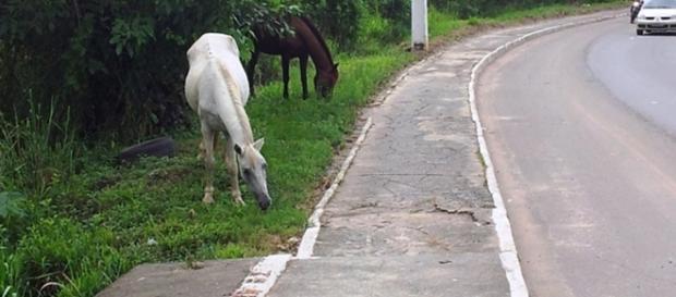 Além dos animais na pista, buracos e falta de sinalização atrapalham os motoristas