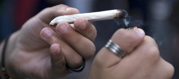 I consigli di un gruppo di ricercatori sul consumo di cannabis.