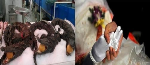 Noiva cadáver, crocodilos e outras coisas que na China são comuns