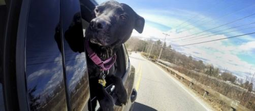 Bill would ban dogs from roaming about vehicles, hanging out ... - pressherald.com