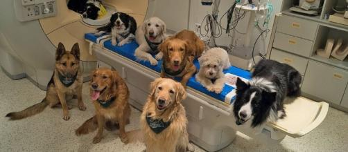 Your dog really does know what you're saying, and a brain scan ... - pressherald.com