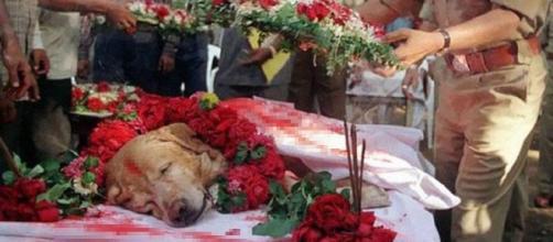 Enterro do cão herói, na Nigéria