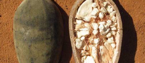 Frutto africano Baobab-meteoweb.eu