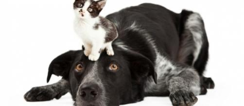 Killing dogs and cats for meat is still legal in 44 U.S. states ... - inhabitat.com
