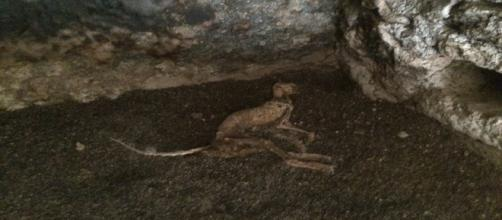 Kubash acredita registrar lendária criatura em caverna (Christopher J. Kubash)