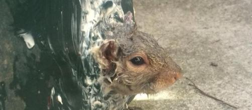 Squirrel remained stuck despite being oiled and buttered - The ... - bostonglobe.com