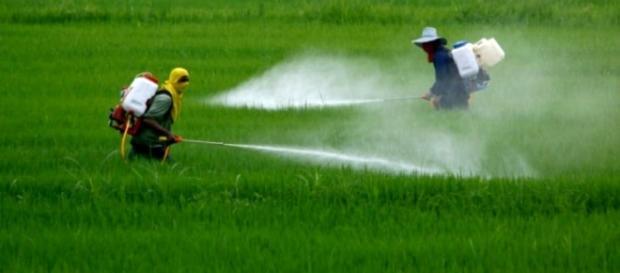Aumentano i casi di autismo negli Stati Uniti legati all'uso di pesticidi
