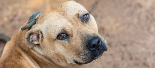 What Is Dog Fighting, and What Can You Do To Stop It? | ASPCA - aspca.org