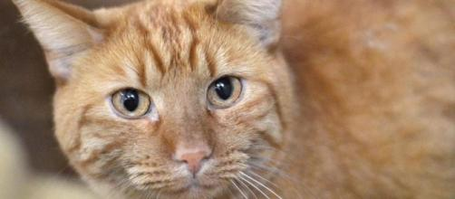 prohibe comer carne de gato y perro y otras 6 noticias de la ... - lavanguardia.com