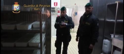 Sequestro caseificio 3 (foto: GDF)