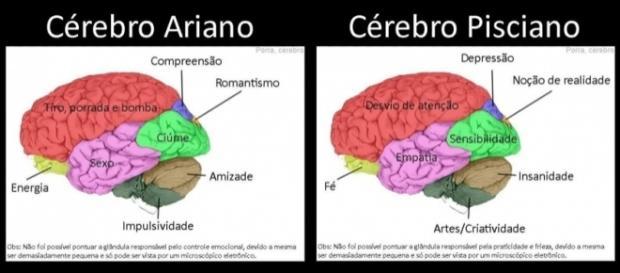 Como é o cérebro de cada signo? Fotos: Reprodução/Facebook/Porra, Cérebro.