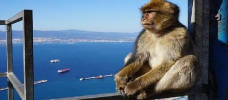 Are the Spanish trying to antagonise the British over Gibraltar?