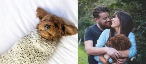 Casal resolveu mostrar todo seu amor pelo seu cãozinho