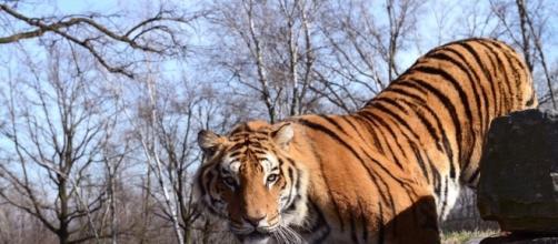 Uno degli animali del Safari Park.