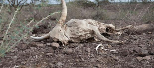 El Nino sorgt für Dürre in Äthiopien: Äthiopien trocknet aus - Blick - blick.ch
