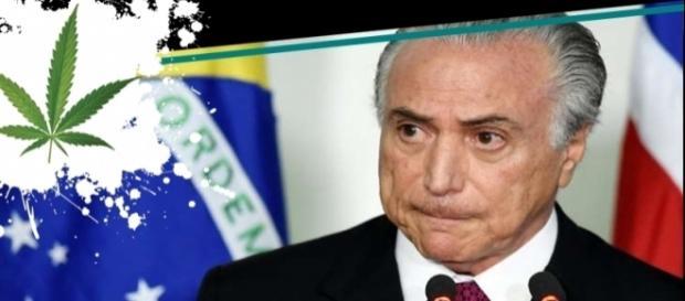 Seis motivos para se discutir a legalização da maconha no Brasil