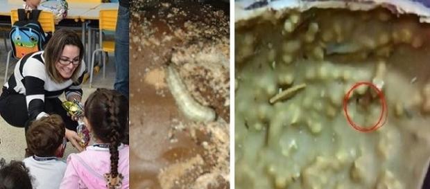 Ovos cheios de larvas foram encontrados por mães de crianças em Bertioga - SP