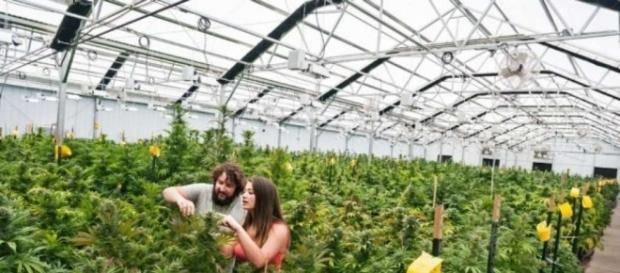 Will legal marijuana give home prices a new high? - SFGate - sfgate.com