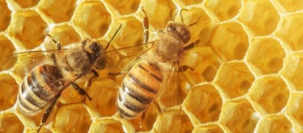 Abeilles et miel - apiculteurs en colère - (CC BY)