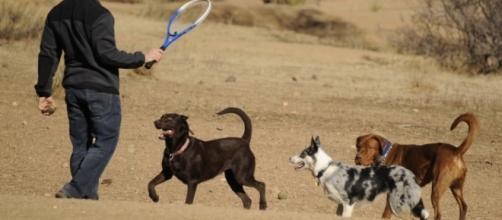 Colorado ranks No. 3 in the nation for healthiest pets | Colorado ... - gazette.com