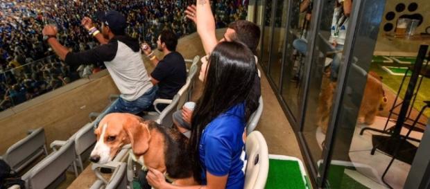 Mineirão inova e lança 'arCãobancada', espaço para cachorros ... - com.br