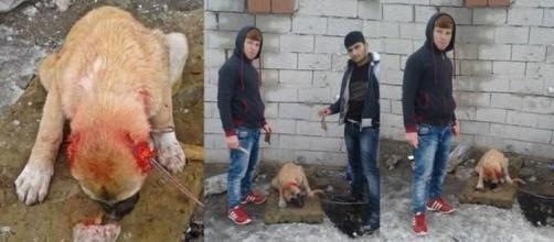 CHOC: Ils coupent les oreilles d'un chien pour un selfie