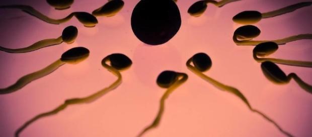 Testimonios de menores de 30 que se han esterilizado - Vice - vice.com