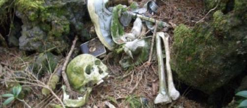Akiogahara, a Floresta do Suicidío