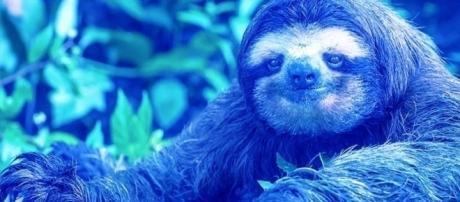 'Preguiça Azul' é o novo desafio da internet e foi criado por brasileiros