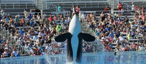 Killer whale dies at SeaWorld San Antonio | Hits 97.3 - hits973.com
