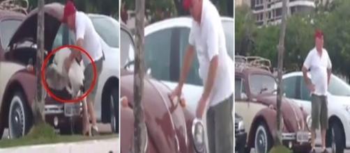 Vídeo mostrando maus tratos está nas redes sociais