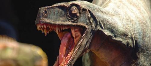 un esemplare di dinosauro in mostra al Mudec
