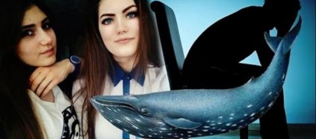 Baleia Azul pode dar cadeia - Imagem/Google