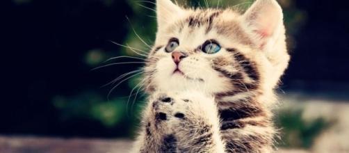 Os gatos são únicos e muito carinhosos