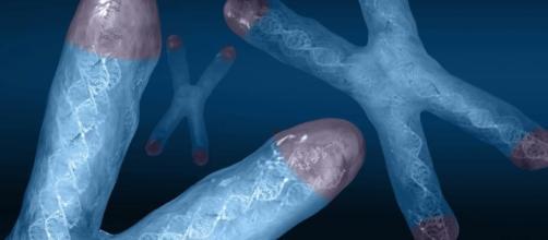 Los telomeros son los responsables de activar el reloj biológico