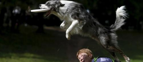 La capacidad de aprendizaje de los perros está ligada a su condición de animal social