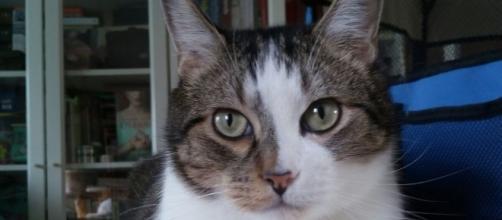 Los gatos como animales de compañía despiertan pasiones
