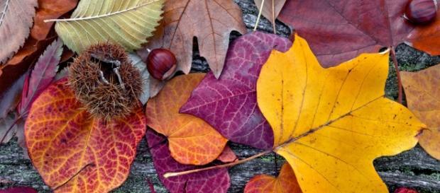 Dicas para o outono não te causar problemas
